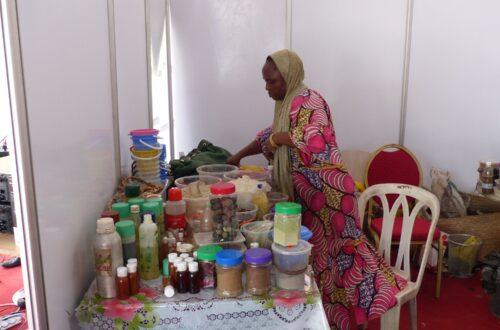 Article : Le pavillon du Niger entre sexe, art et coquetteries !